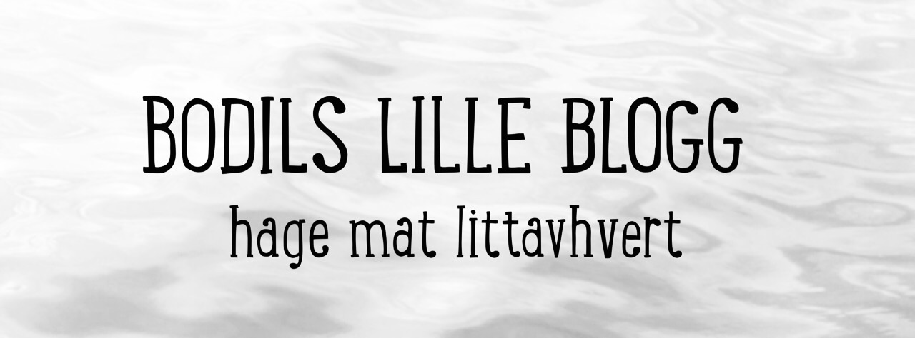 Bodils lille blogg