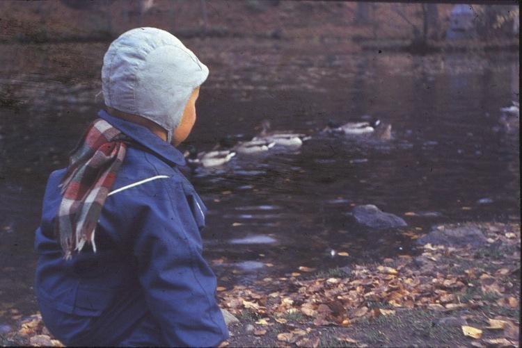 Bjørn 1962/63