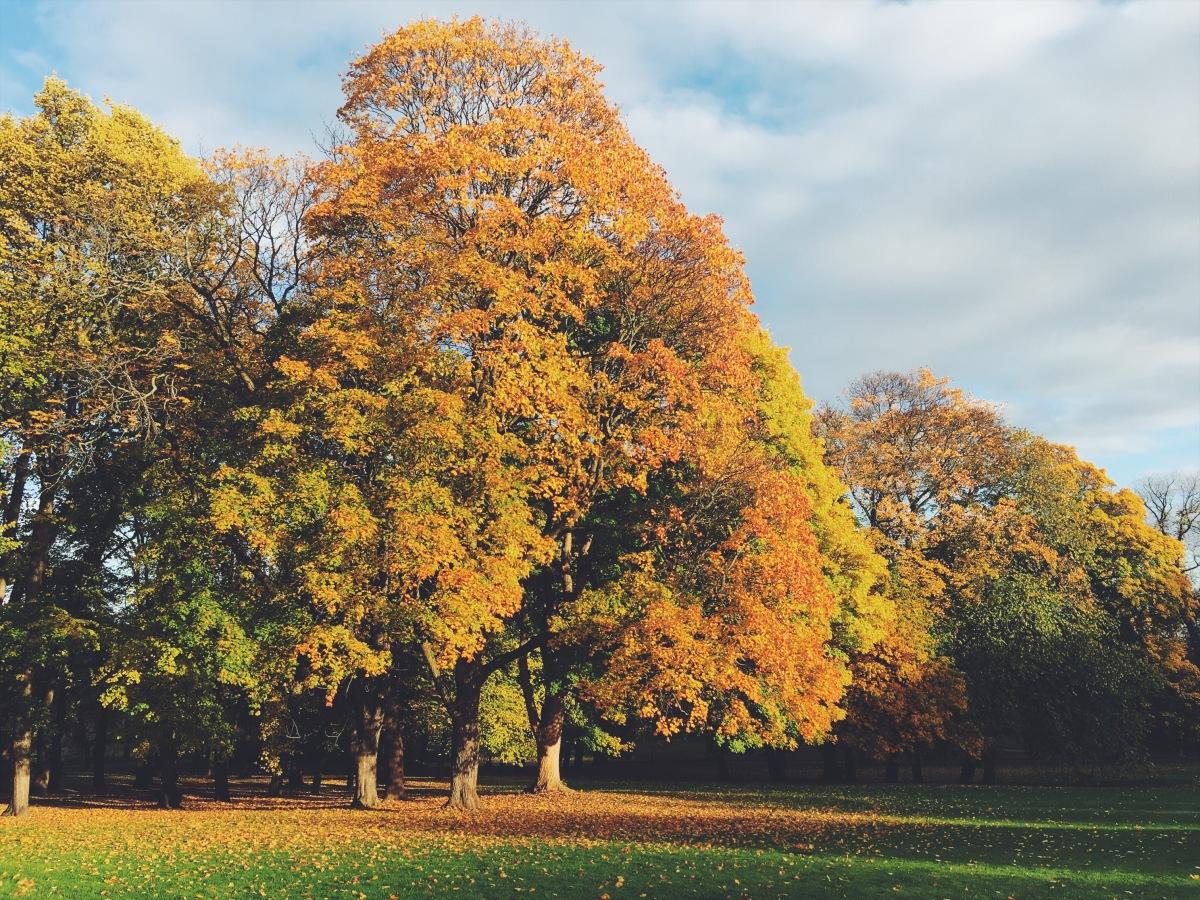 Høst i Slottsparken